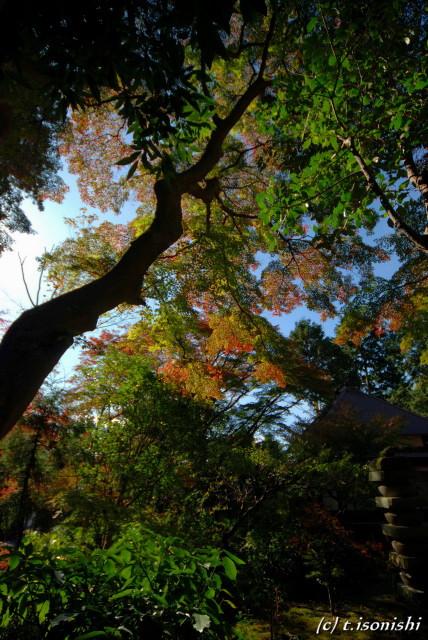 円覚寺の紅葉(2008/11/23)
