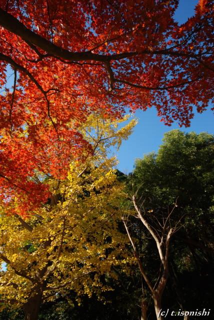 源氏山公園の紅葉(2008/11/23)