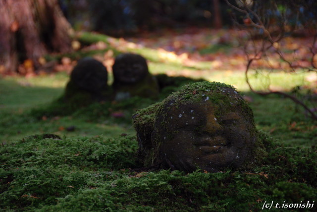 三千院(2008/11/27)