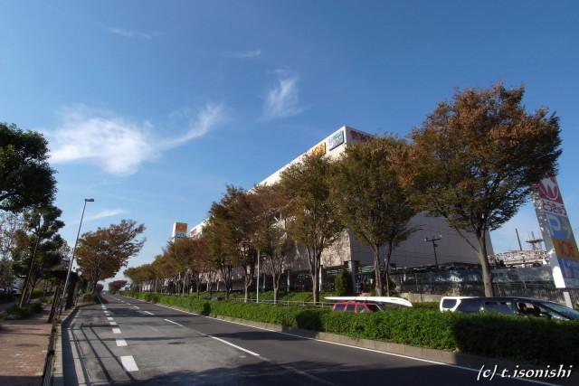 並木道(2008/11/2)