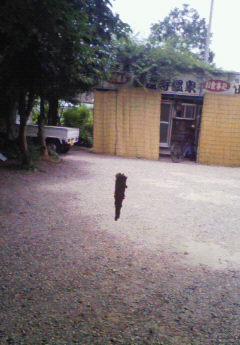 20080713minomushi