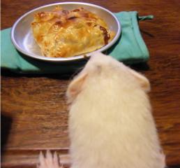 アップルパイと健太郎0815
