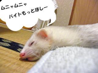 快挙のお礼090109-2