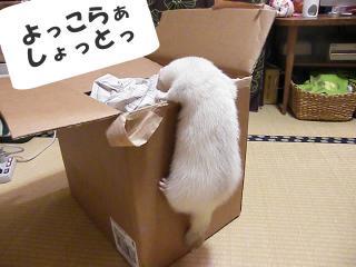 突撃荷物検査090113