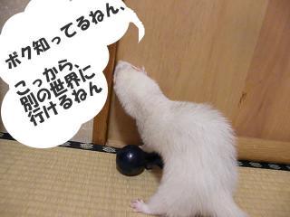切り株と健太郎090119-2