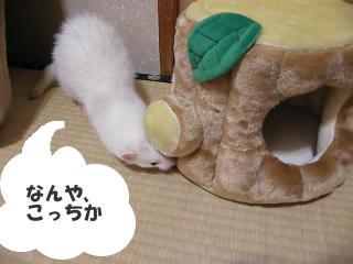 健太郎と切り株090119-5