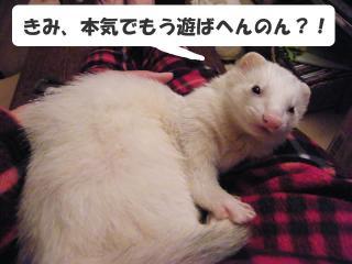 暇な健太郎090221-3