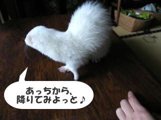 健太郎移動中090329-3