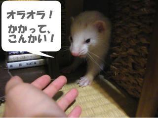 いかさま健太郎090701-1