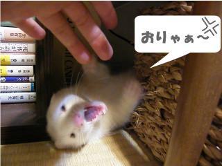 いかさま健太郎090701-2