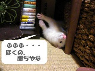 いかさま健太郎090701-4