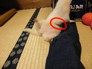 毛刈り太郎0908-4