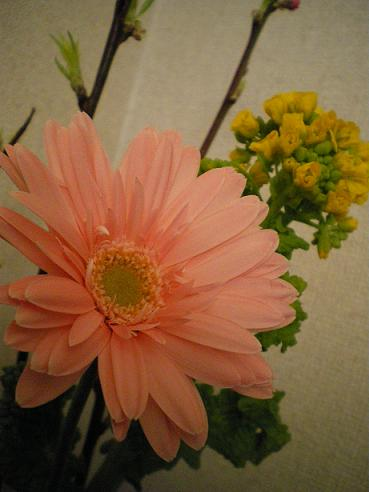 3月3日のお花