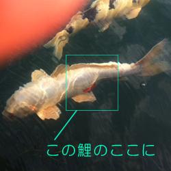 2011-10-09-08.jpg