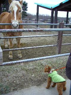 初めてのお馬さん