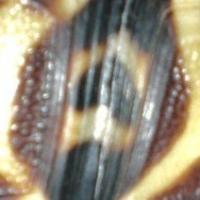 繧ウ繝斐・+・・繧ウ繝斐・+・・DSCN1020_convert_20111028081852