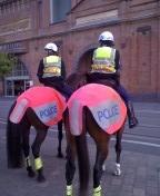 シドニー 警察 馬