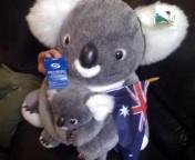 オーストラリア こあら 動物保護