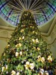 クリスマスツリー オーストラリア
