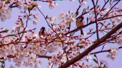 sparrow02