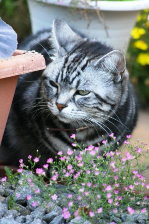 いやん♪ ななちゃんとお花、可愛い