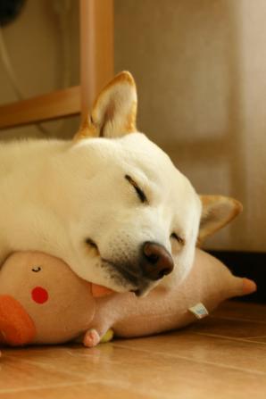 ゆっくりおやすみちゃん