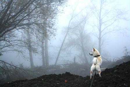 なかなか霧がはれないねー