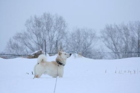 お昼は雪が降っていた