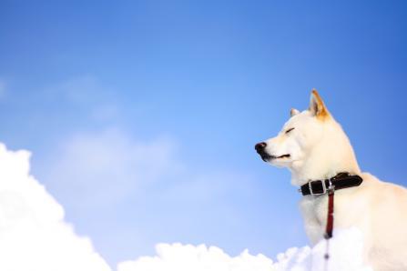 空の雲と地上の雲