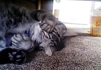 猫の可愛らしさ♪