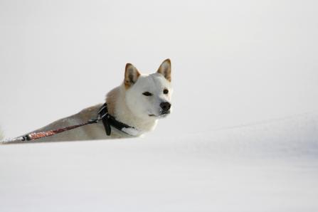 晴れてたら楽しい雪