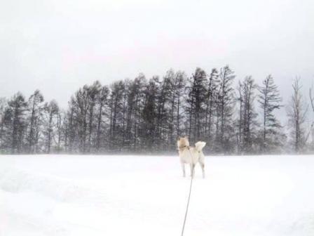 雪はいいけど風はキライだ