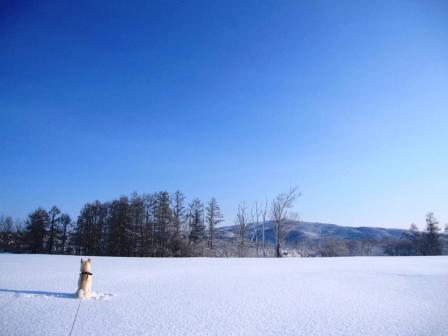 でも5時起きで除雪に1時間かかった・・・