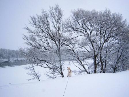 今日も雪が降っている