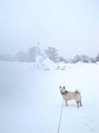 レンズに雪がついて濡れました