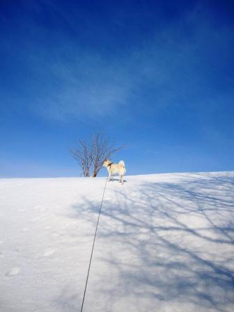 雪に樹の陰が映ってるよ
