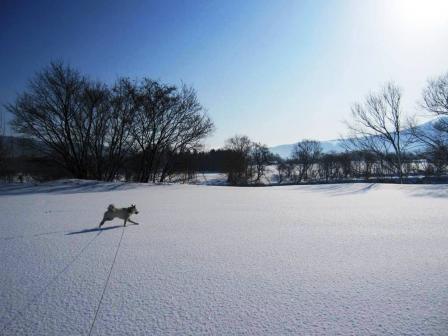 雪が積もって再びマッサラ