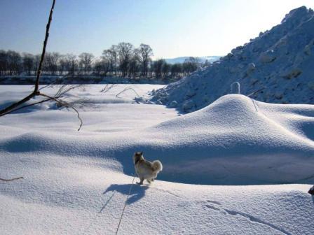 車に着いた氷を蹴るには最適だけど、散歩には向かないかも