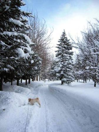 冬の雪が降った♪嬉しいやら悲しいやら