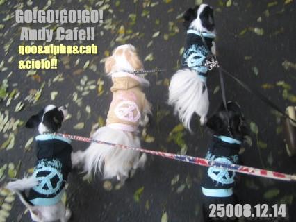 フォトライブラリ - 3998