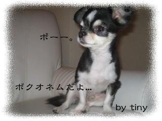 フォトライブラリ - 4057