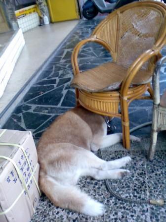 躲在椅子下...XD