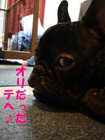 DSCchiroru.jpg