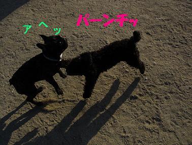 DSCdogrun0605-1.jpg