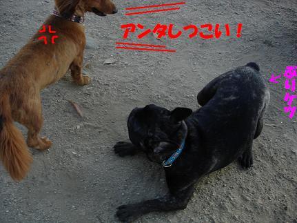 DSCdogrun0605-2.jpg