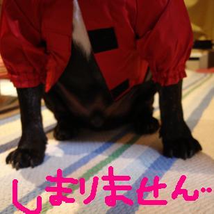 DSCraincoat2.jpg