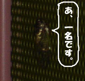 DSCsemi1.jpg