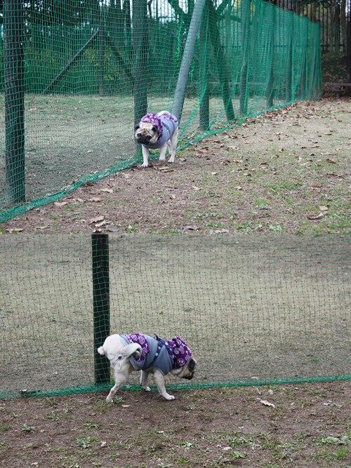 cats_20091210214529.jpg
