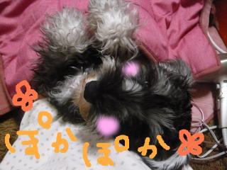 snap_jirokkosan_2008113214435.jpg