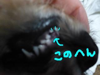 snap_jirokkosan_2008113225048.jpg